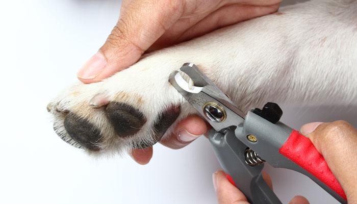 taglio unghie cane